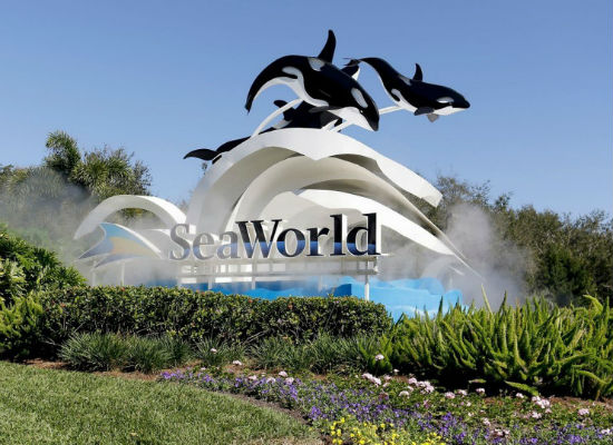 SeaWorld Theme Park